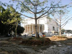 הקצה הצפוני של שדרות רוטשילד ושלושת העצים שהועברו לכיכר ולרחוב מרמורק ובכך התאפשר המשכיותה. צילום: יוסי מטלון